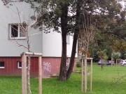 Výsadby nových stromků Zábřeh